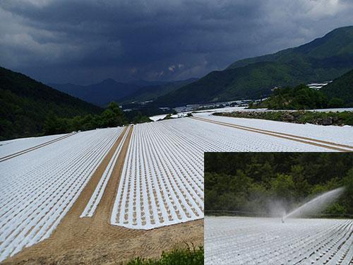 畑地帯全景 右下写真:スプリンクラー散水状況(落差方)
